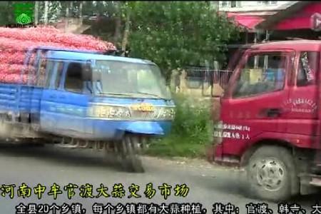 2015年大蒜收购旺季实录3——记河南中牟大蒜市场 ()