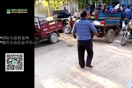 河北馆陶蒜苔交易实况  【拍客】馆陶强哥 ()