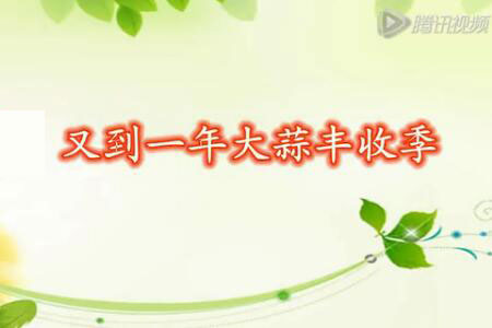 通许:又到一年大蒜丰收季 【拍客:通许王双意】 ()