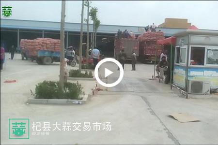 6月3日杞县大蒜实况 ()