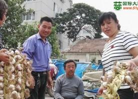 聊城:大蒜往日风光不再 ()
