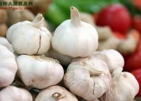济南:陈蒜鲜蒜价差6倍多 ()