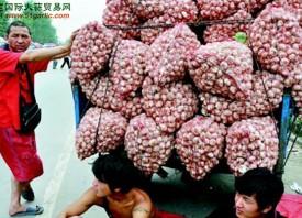 菏泽蒜农:卖不卖,都头疼 ()