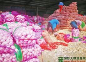 """杞县:""""小蒜瓣""""发展成大产业 ()"""