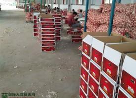 中国大蒜保持出口优势 ()