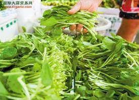 长沙:叶类蔬菜上涨明显