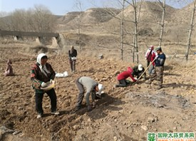 海东乐都:围绕紫皮大蒜产业积极发展