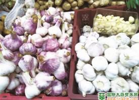 徐州:新蒜零售价格偏低 ()