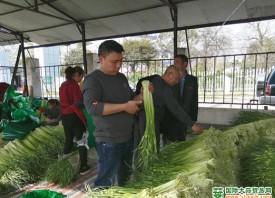 什邡10万亩蒜薹�迎来丰收季 ()