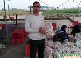 埃及大蒜出口竞争力增强 ()