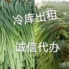 专业代收代储存大蒜蒜苔