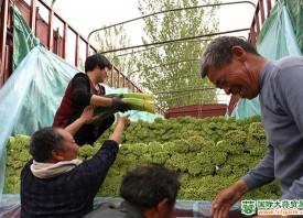 杞县10万亩早熟蒜薹上市 ()