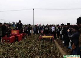 丰县:加强大蒜生产机械化作业 ()