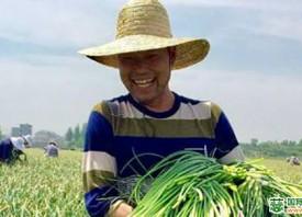 兰陵:蒜薹、大蒜保险稳价惠农