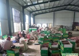 中国大蒜销售优势明显 ()