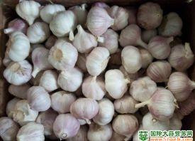 中国大蒜出口机遇和挑战并存 ()