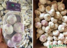 中国大蒜出口有喜有忧 ()