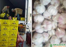 中国大蒜积极开拓欧洲市场 ()
