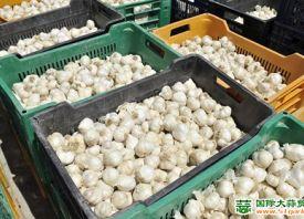 意大利:大蒜产业举步维艰 ()