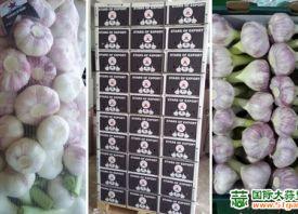 埃及大蒜种植商积极拓展欧洲市场 ()