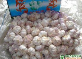 春节后姜、蒜价格上涨