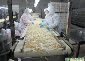 中国新鲜蒜米畅销欧洲市场