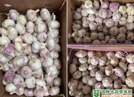 金乡:新蒜价格上涨强劲 ()