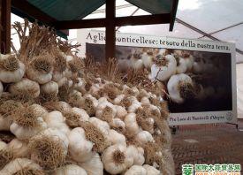 意大利:大蒜产量下降