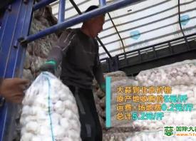 今年邳州蒜价高达去年同期两倍 ()