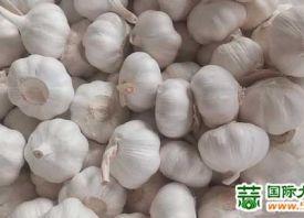 大蒜:低价促进出口销售 ()