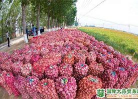 """商河大蒜:""""十佳最受欢迎品牌农产品"""" ()"""