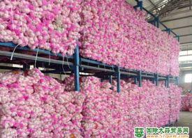 近期欧洲市场对白蒜采购量较大 ()