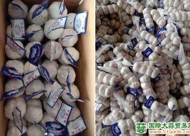 大蒜:东南亚和中东进口量较大 ()