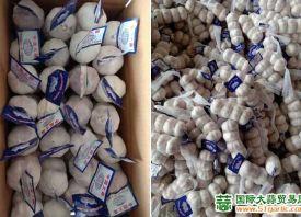 七月海外大蒜进口量略低 ()