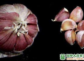 农业科学院:大蒜基因组测序完成 ()