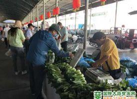 """嘉峪关:菜价降温 """"一元菜""""重回市场"""