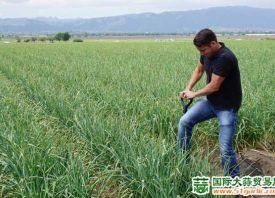 美国加州:大蒜出货量大幅增长 ()