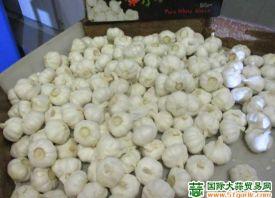 西班牙:大蒜减产 售价较高 ()