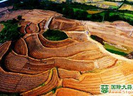 江西湖口:农户种植优质大蒜 ()