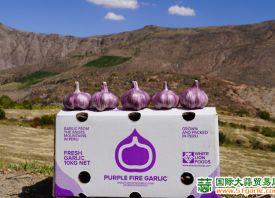 秘鲁:新季大蒜需求旺盛价格好 ()
