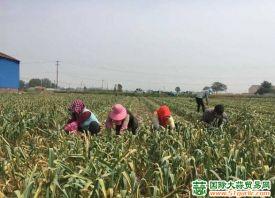 金乡:2021年大蒜保险动员会议召开 ()