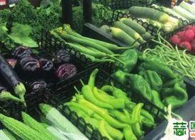 石家庄:蔬菜均价低于河北平均水平 ()