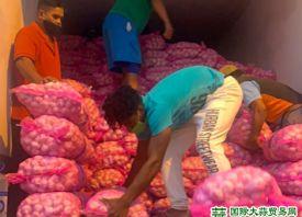 大蒜:海外市场 需求强劲 ()