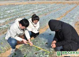 平度:开展大蒜种植试验 ()