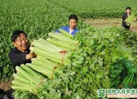 6月份蔬菜身价备涨