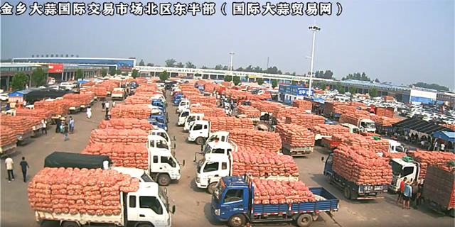 金乡大蒜国际交易市场北区东半部