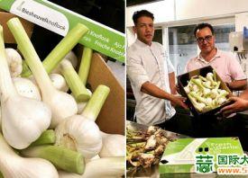 荷兰:大蒜消费潜力大 ()