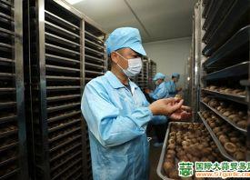 柘陂村:大蒜产业脱贫致富
