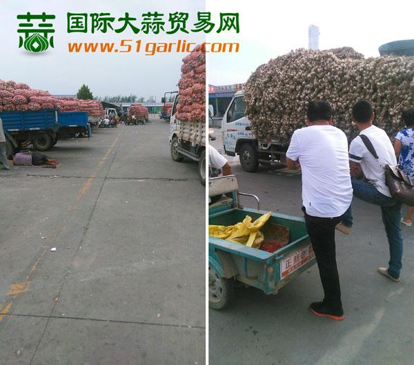 国际大蒜贸易网——实话石说