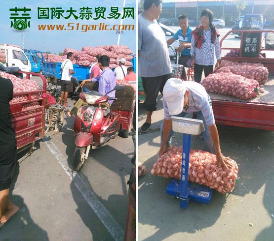 """国际大蒜贸易网——""""实话石说"""""""